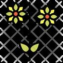 Chrysanthemum Flower Flowers Icon