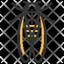 Cicada Insect Bug Icon