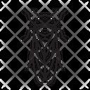 Cicada Bug Insect Icon