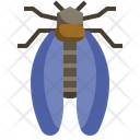 Cicada Entomology Insects Icon