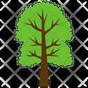 Tree Cimmaron Ash Icon