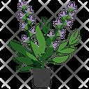 Clary Sage Plant Icon