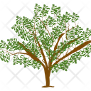 Fruit Tree Clove Tree Wild Tree Icon