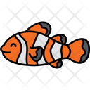 Clown Fish Anemonefish Ocellaris Icon