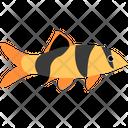 Clown Loach Fish Icon
