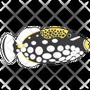 Clown Triggerfish Icon