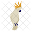 Cockatiel Pirate Bird Bird Icon