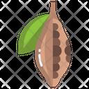 Cocoa Fruit Icon