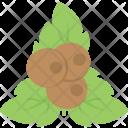 Coconut Fruit Planting Icon