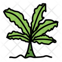 Coconut Tree Tree Green Icon