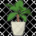 Codiaeum Potted Plant Icon