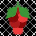 Coffee Arabica Plant Icon