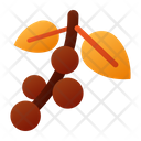 Coffee Cherry Drink Icon