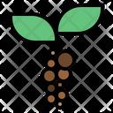 Coffee beans plant Icon