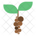 Coffee Beans Plant Icon
