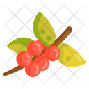 Coffee Tree Icon