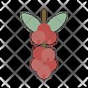 Coffee Tree Bean Plant Icon