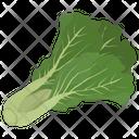Collard Green Lettuce Icon