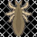Beetle Insect Scarab Beetle Icon