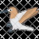 Common Guillemot Icon