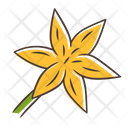 Common Star Lily Common Lily Icon