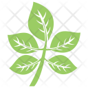 Compound Leaves Icon