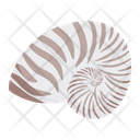Conch Snail Shell Icon