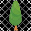 Poplar Fir Pine Icon