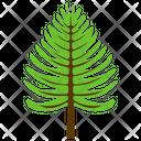 Poplar Tree Fir Icon
