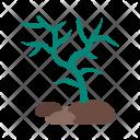 Corals Icon