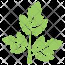 Coriander Leaf Icon
