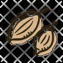Coriander Seeds Plant Icon
