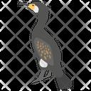 Cormorant Icon