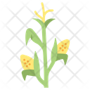 Corn Maize Agriculture Icon