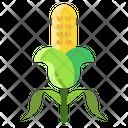 Acorn Gains Barley Icon