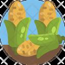 Corn Food Fresh Icon