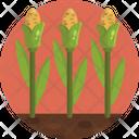 Corn Plant Harvest Icon