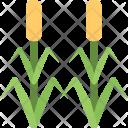 Corn Field Icon