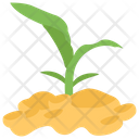 Corn Sprout Growing Seed Plant Growing Icon
