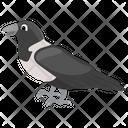 Corvus Albus Crow Bird Icon