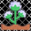 Cotton Flower Icon