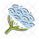 Cow Parsnip Hogweed Icon