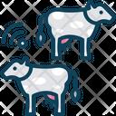 Cows Icon