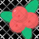 Cranberry Icon