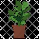Crassula Potted Plant Icon