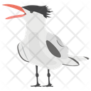 Greater Crested Crested Tern Swift Tern Icon