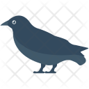 Crow Bird Tree Icon