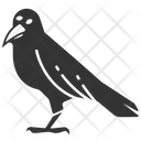 Crow Darkness Scary Icon