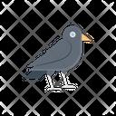 Crow Scary Bird Icon