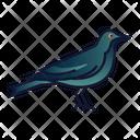Crow Bird Spooky Icon